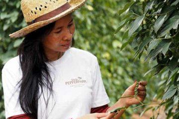 Tägliche Kontrolle aller Pfefferpflanzen